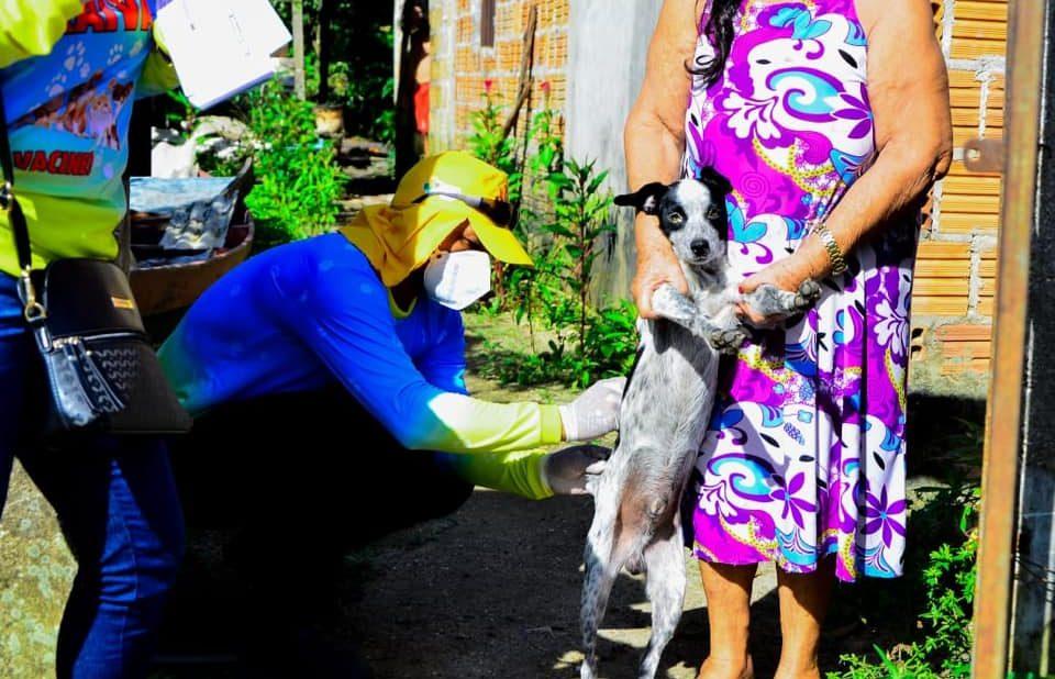Prefeitura de Maués vacina cães e gatos contra a raiva